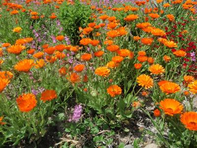 バッちゃんの育てた花