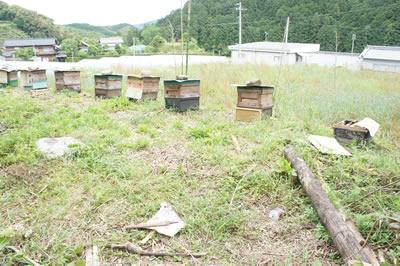 ミツバチ箱