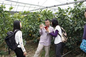 台湾の文旦農家ファミリー