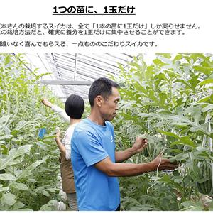 2015:702スイカ江本予約開始